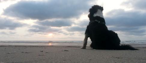 Norderney – Urlaub mit dem Hund