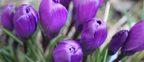 der Frühling kommt nach Norderney